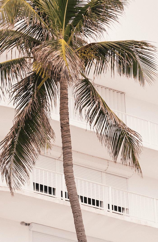 background-photo-trees